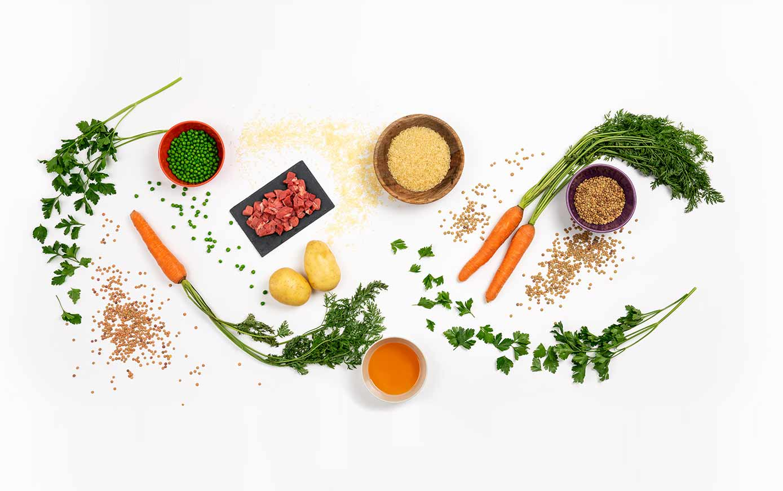 Alimentación natural para perros y gatos, recetas saludables para mascotas